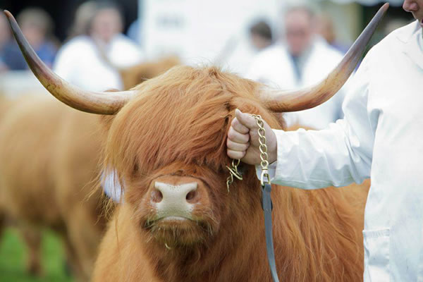 The Royal Highland Show